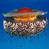 Le meduse, alieni di casa nostra