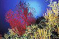 I colori del Giglio, Gita Sociale 2015